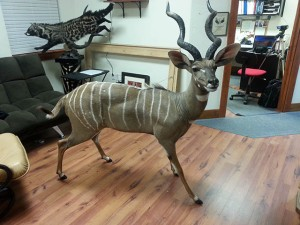 Stephen's award winning lesser kudu